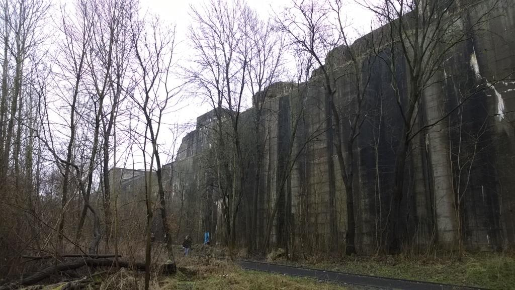Bäume am Bunker Valentin